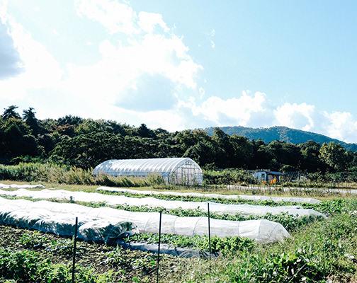 畑の風景の写真